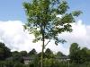 Pflanzen-Baum-Foto_Textur_B_P7258808