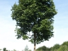 Pflanzen-Baum-Foto_Textur_B_P7268890
