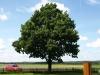 Pflanzen-Baum-Foto_Textur_B_P8094168