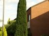 Pflanzen-Baum-Foto_Textur_B_P9059549
