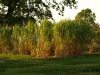 Pflanzen-Baum-Foto_Textur_B_P9089589