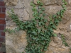 Pflanzen-Baum-Foto_Textur_B_P9285586
