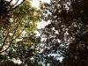 Pflanzen-Baum-Foto_Textur_B_PA250517
