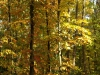 Pflanzen-Baum-Foto_Textur_B_PA250518