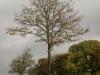 Pflanzen-Baum-Foto_Textur_B_PA260546