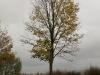 Pflanzen-Baum-Foto_Textur_B_PA260550