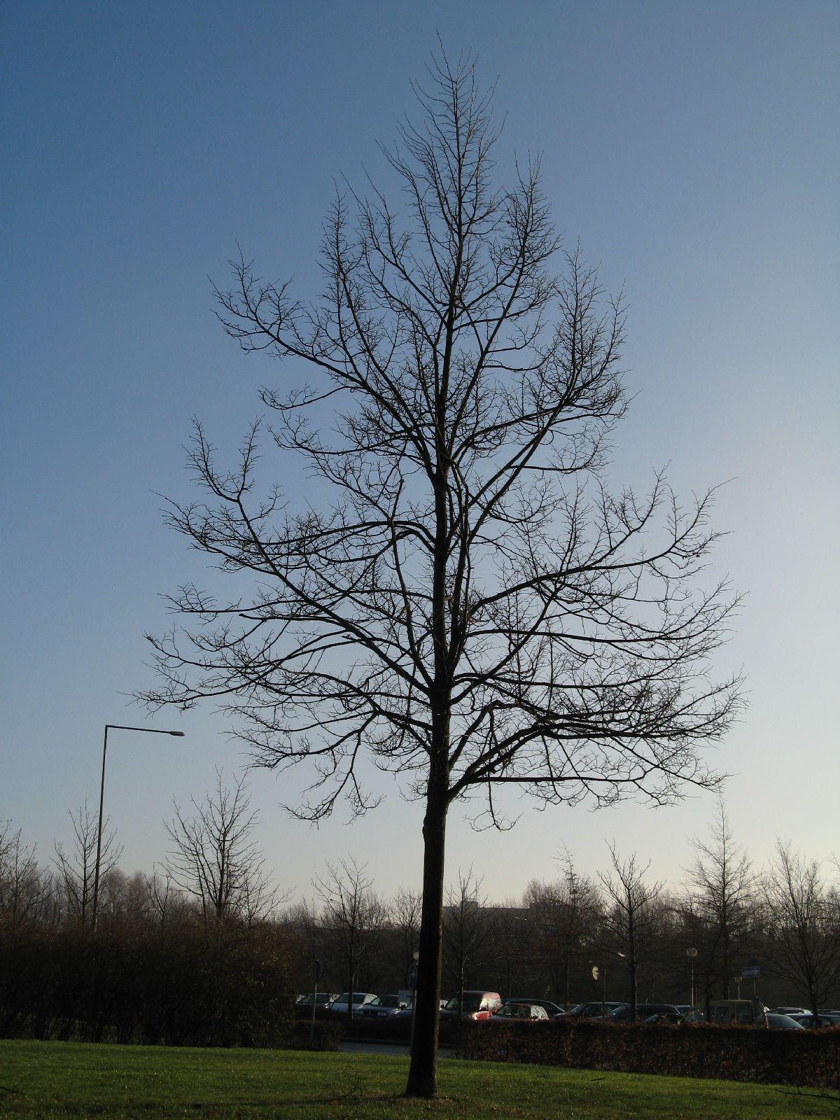 Pflanzen-Baum-Silhouette-Foto_Textur_B_12120