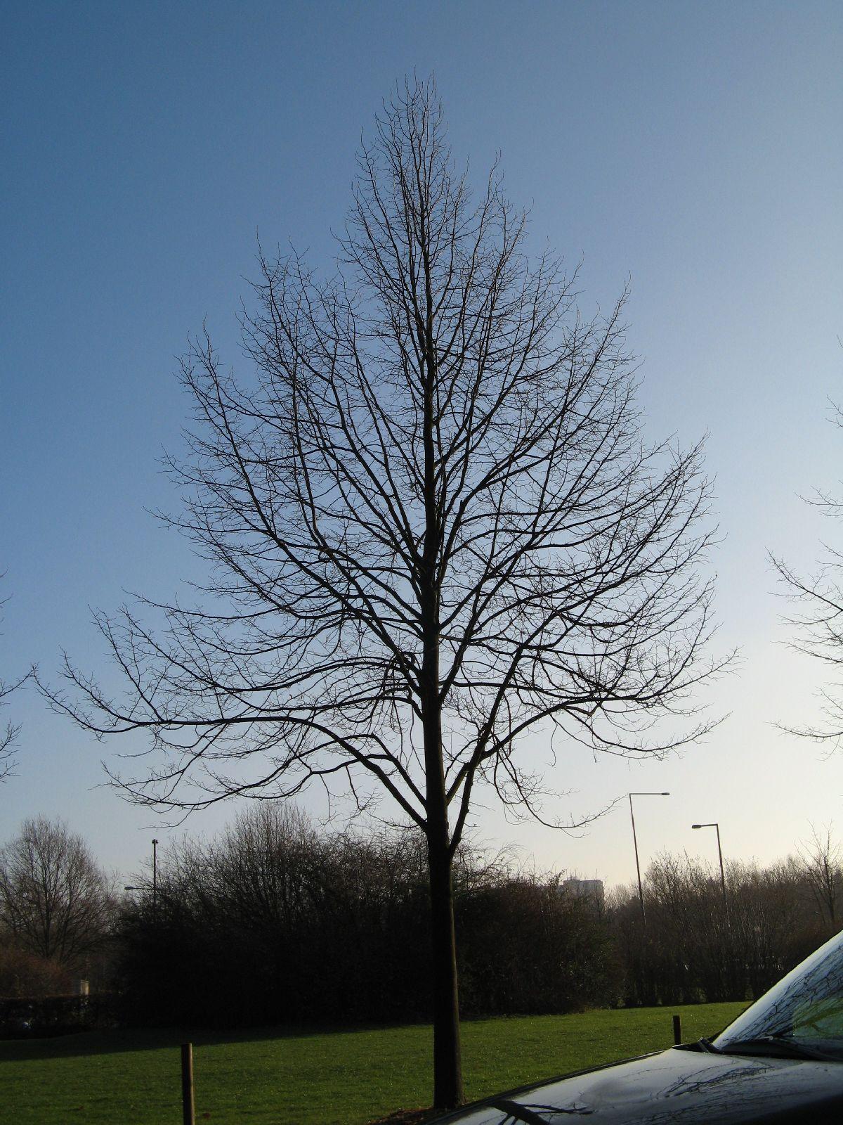 Pflanzen-Baum-Silhouette-Foto_Textur_B_12140