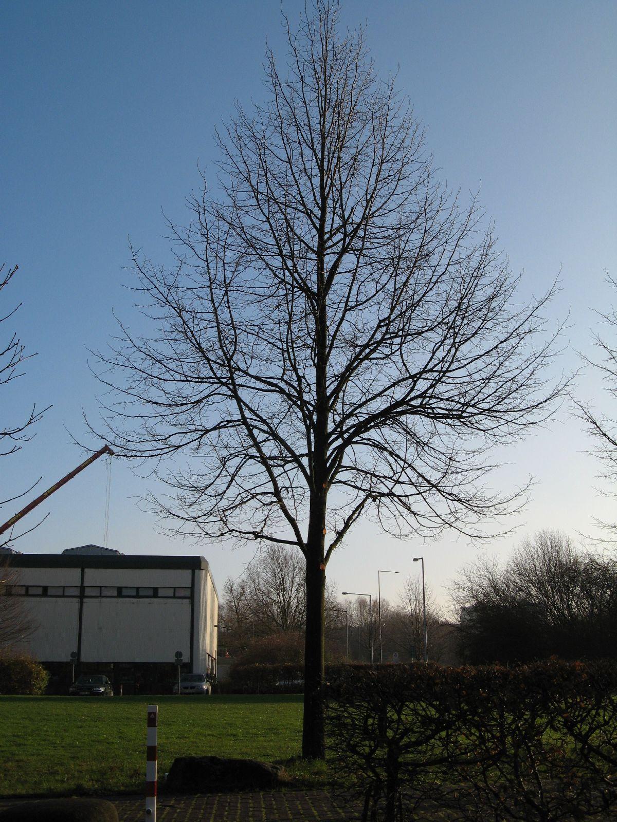 Pflanzen-Baum-Silhouette-Foto_Textur_B_12150