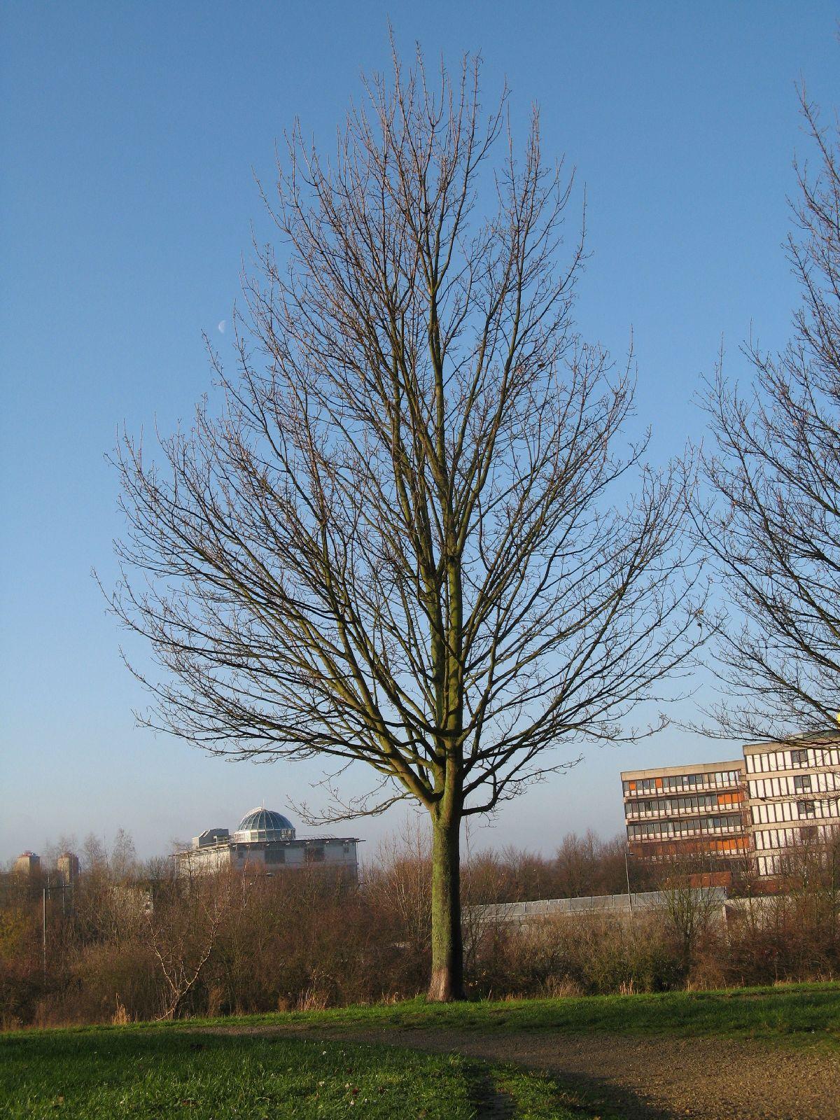 Pflanzen-Baum-Silhouette-Foto_Textur_B_12210