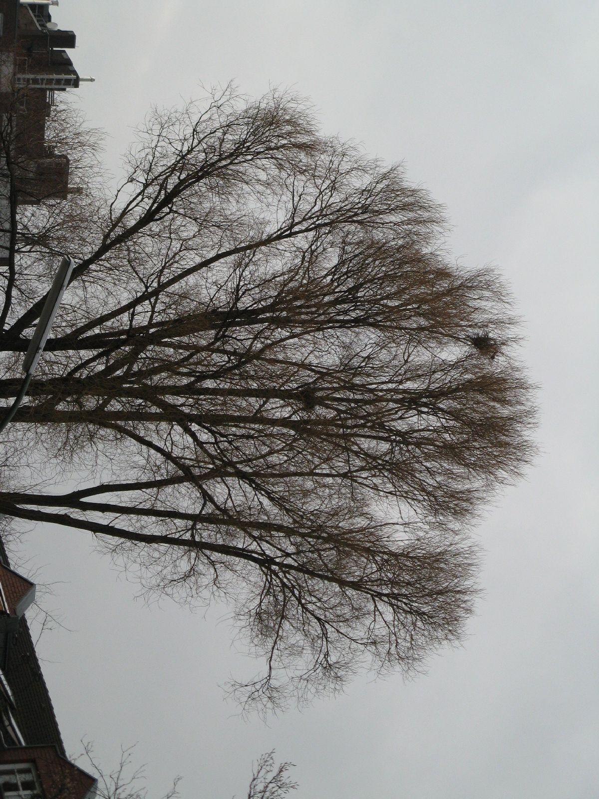 Pflanzen-Baum-Silhouette-Foto_Textur_B_43030
