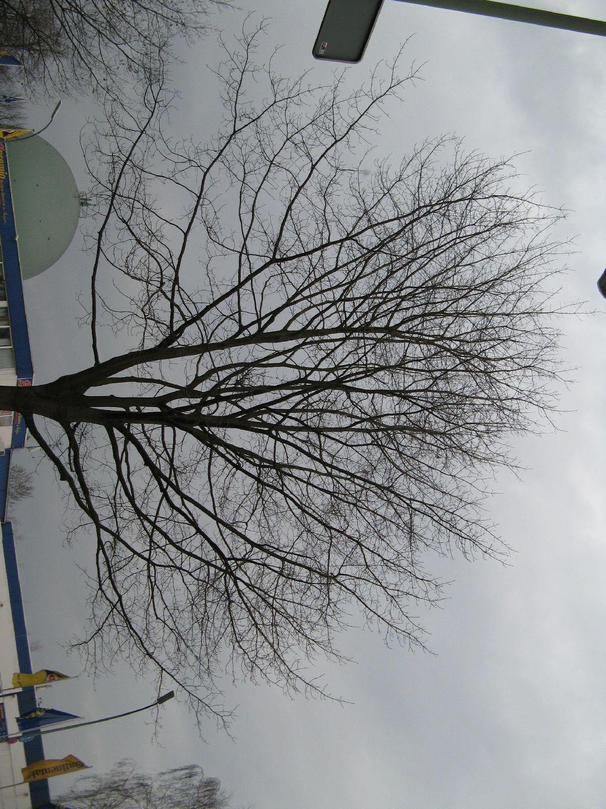 Pflanzen-Baum-Silhouette-Foto_Textur_B_43040