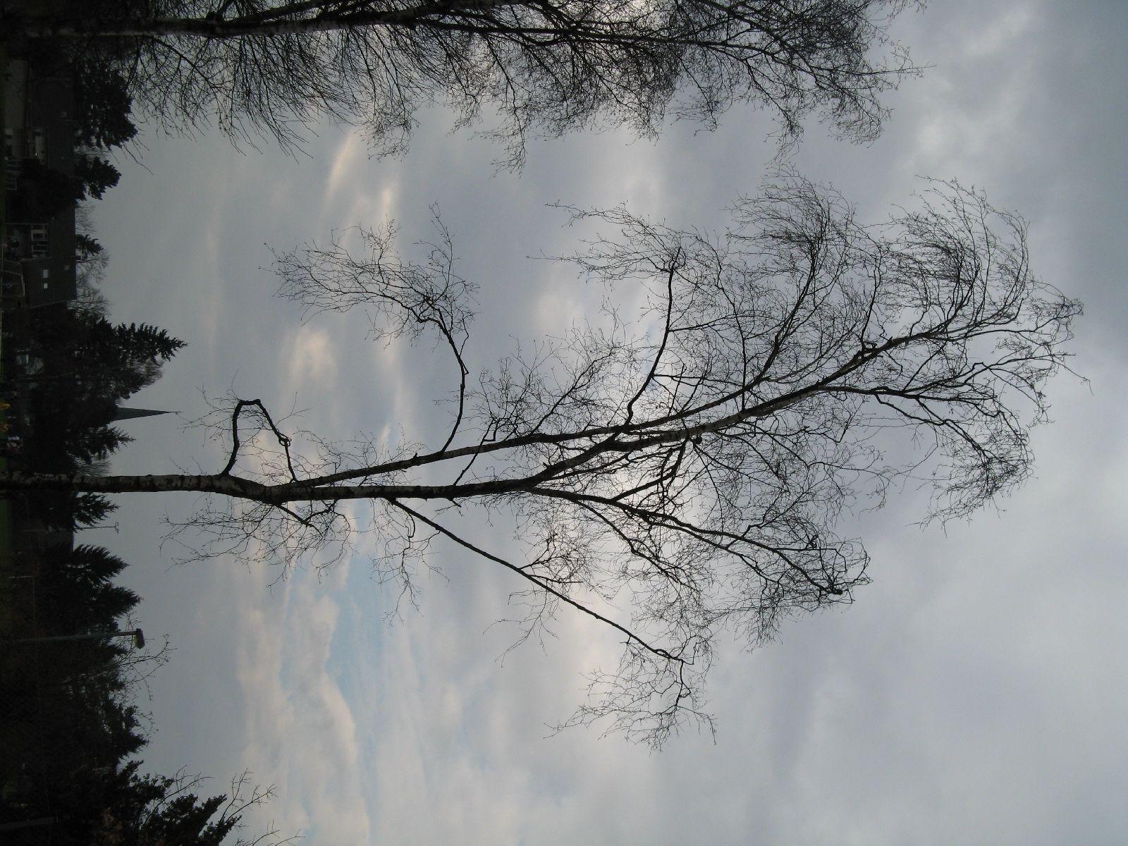 Pflanzen-Baum-Silhouette-Foto_Textur_B_43150