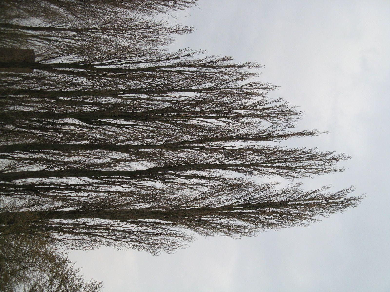 Pflanzen-Baum-Silhouette-Foto_Textur_B_43220