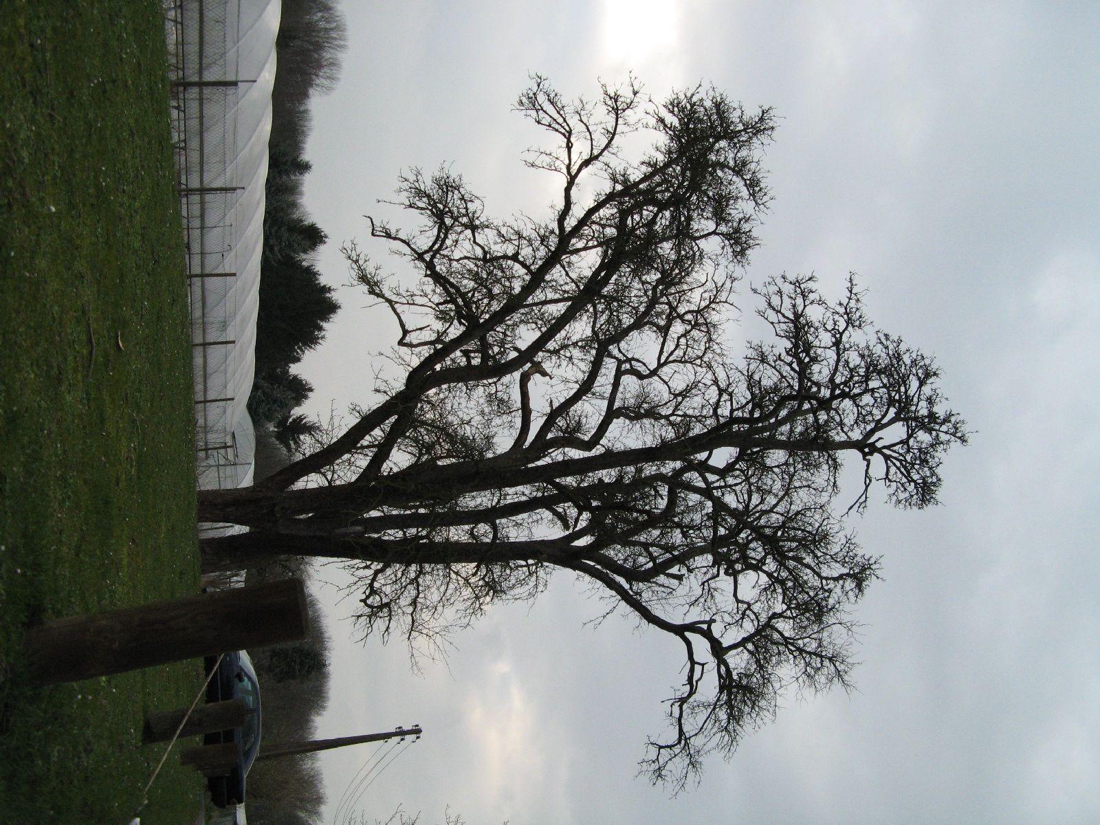 Pflanzen-Baum-Silhouette-Foto_Textur_B_43380
