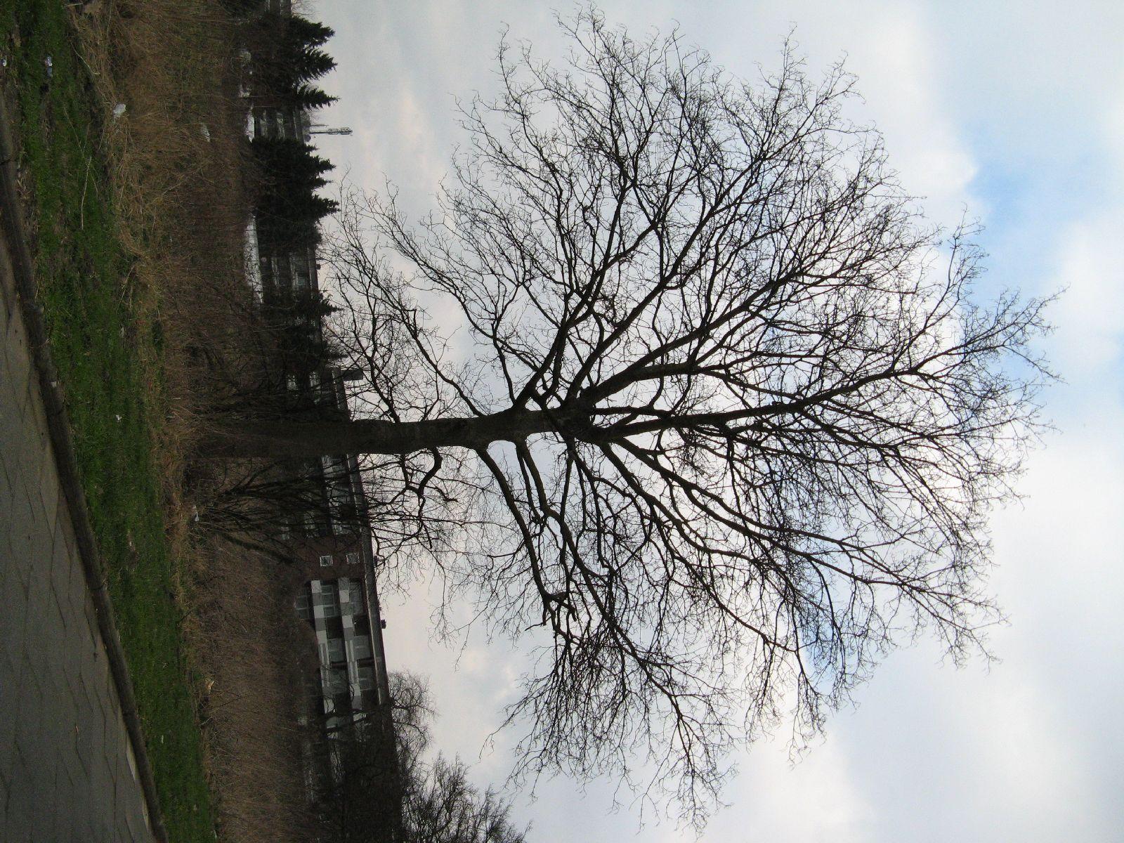 Pflanzen-Baum-Silhouette-Foto_Textur_B_43510