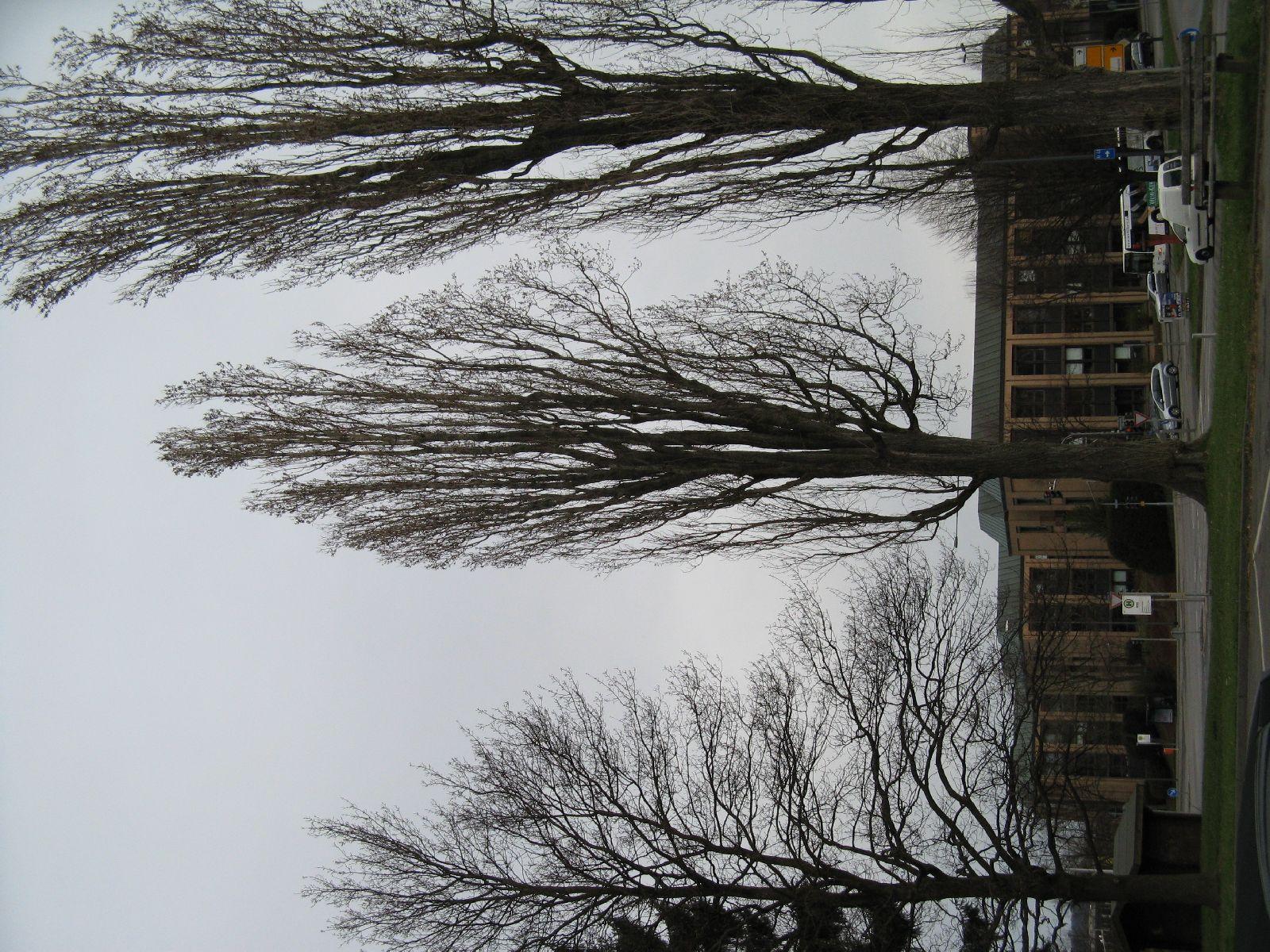 Pflanzen-Baum-Silhouette-Foto_Textur_B_5695