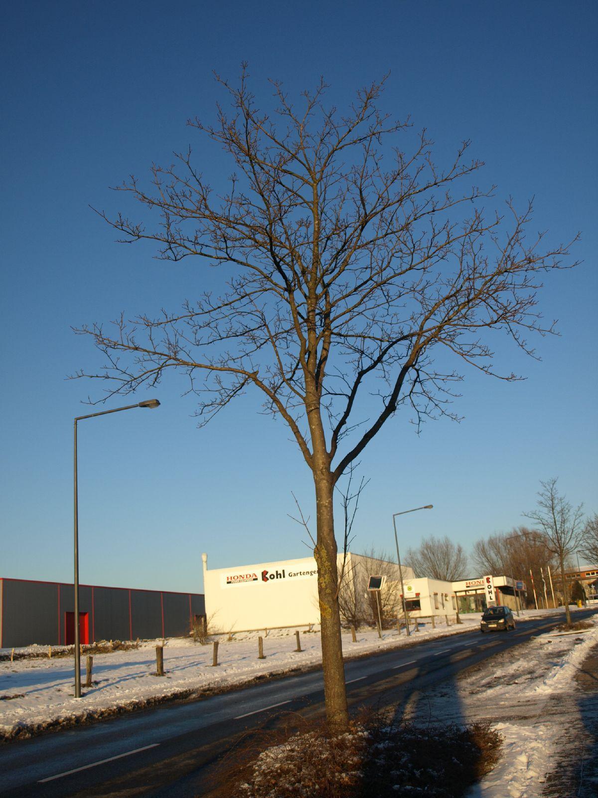 Pflanzen-Baum-Silhouette-Foto_Textur_B_P1109025