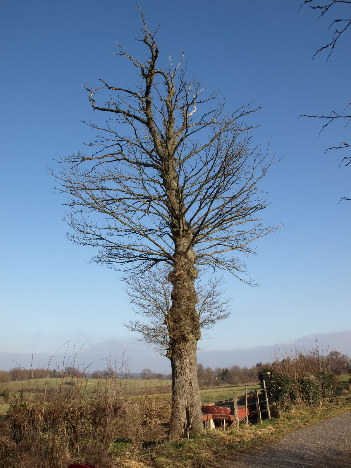 Pflanzen-Baum-Silhouette-Foto_Textur_B_P1310335