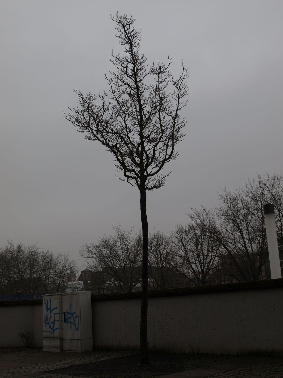 Pflanzen-Baum-Silhouette-Foto_Textur_B_P2280898