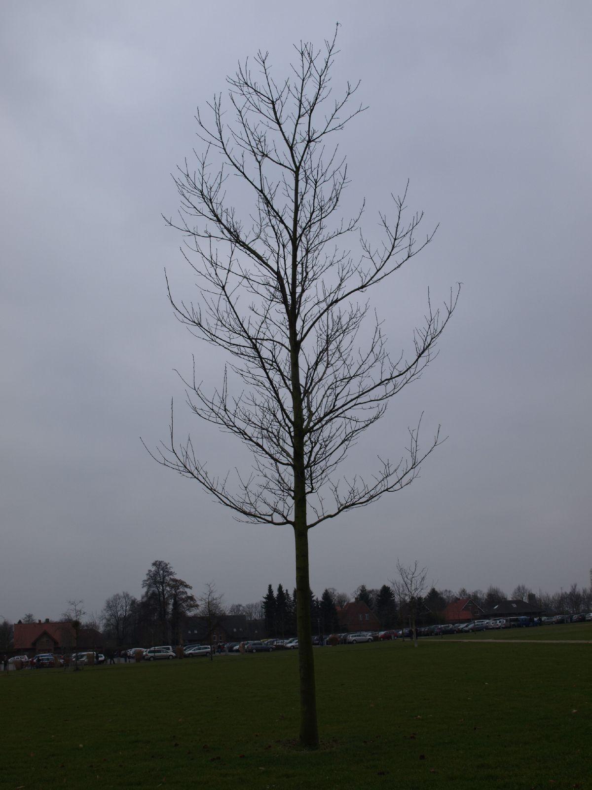 Pflanzen-Baum-Silhouette-Foto_Textur_B_P3011031