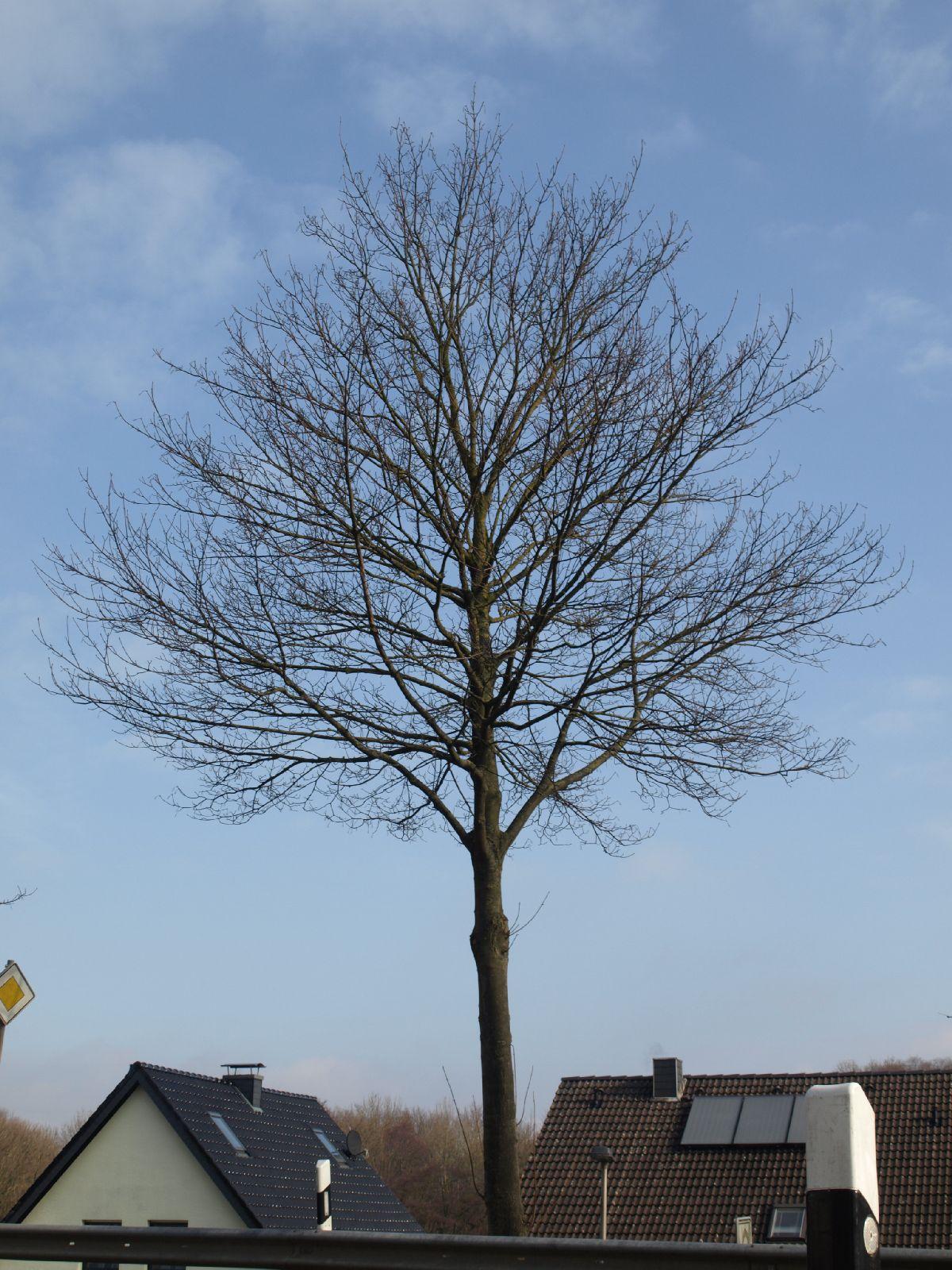 Pflanzen-Baum-Silhouette-Foto_Textur_B_P3071195