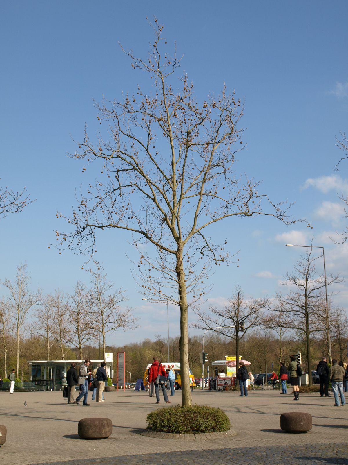 Pflanzen-Baum-Silhouette-Foto_Textur_B_P4171345