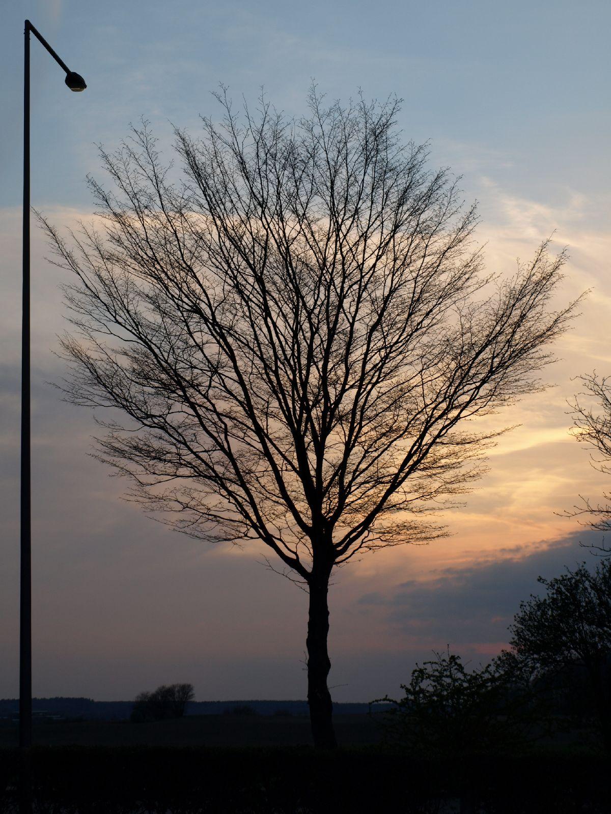 Pflanzen-Baum-Silhouette-Foto_Textur_B_P4171365
