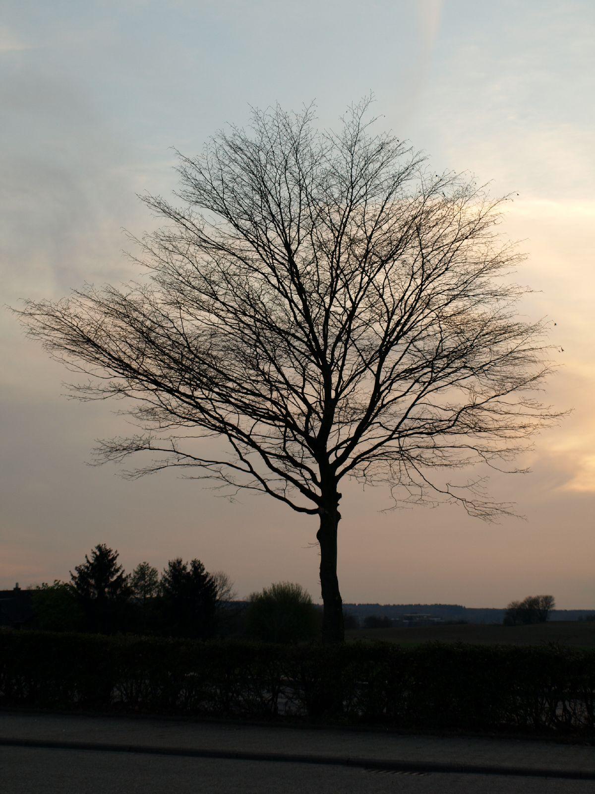 Pflanzen-Baum-Silhouette-Foto_Textur_B_P4171367