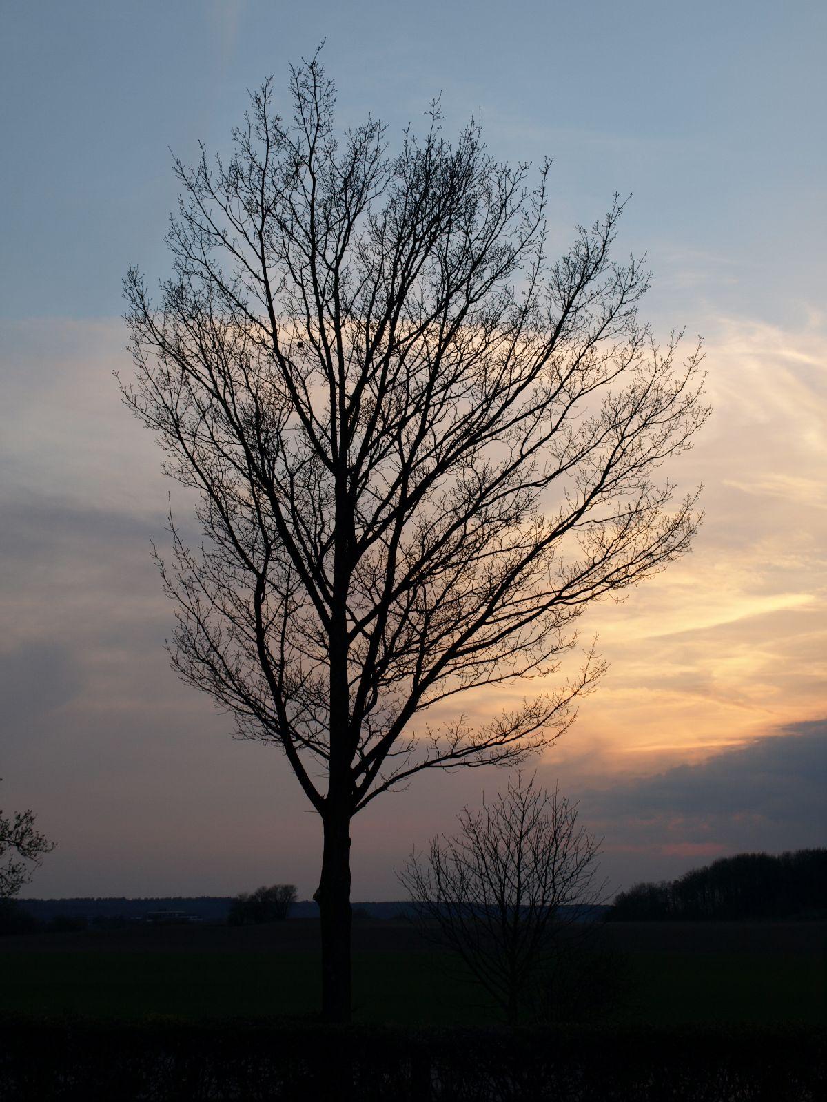 Pflanzen-Baum-Silhouette-Foto_Textur_B_P4171371