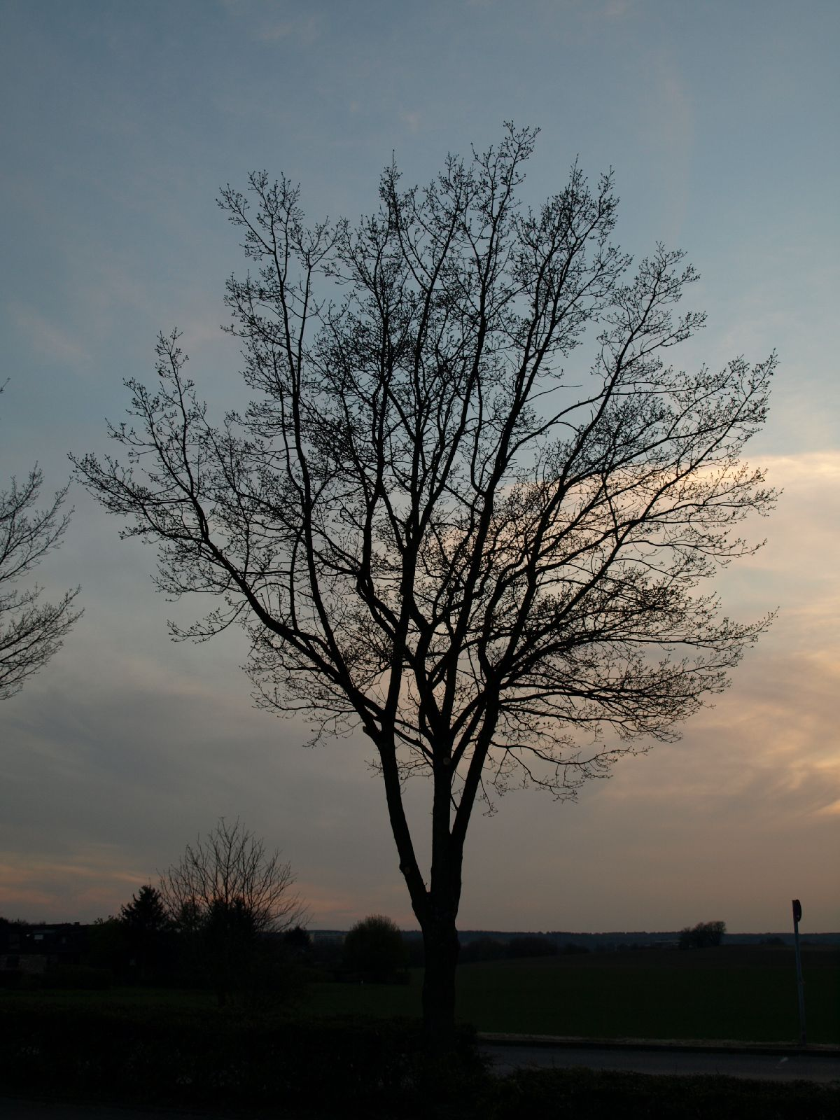Pflanzen-Baum-Silhouette-Foto_Textur_B_P4171378
