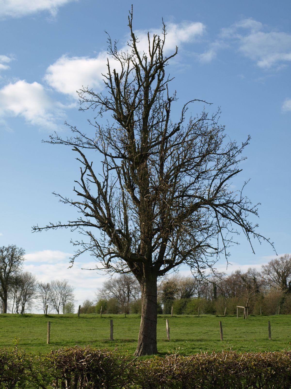 Pflanzen-Baum-Silhouette-Foto_Textur_B_P4201543
