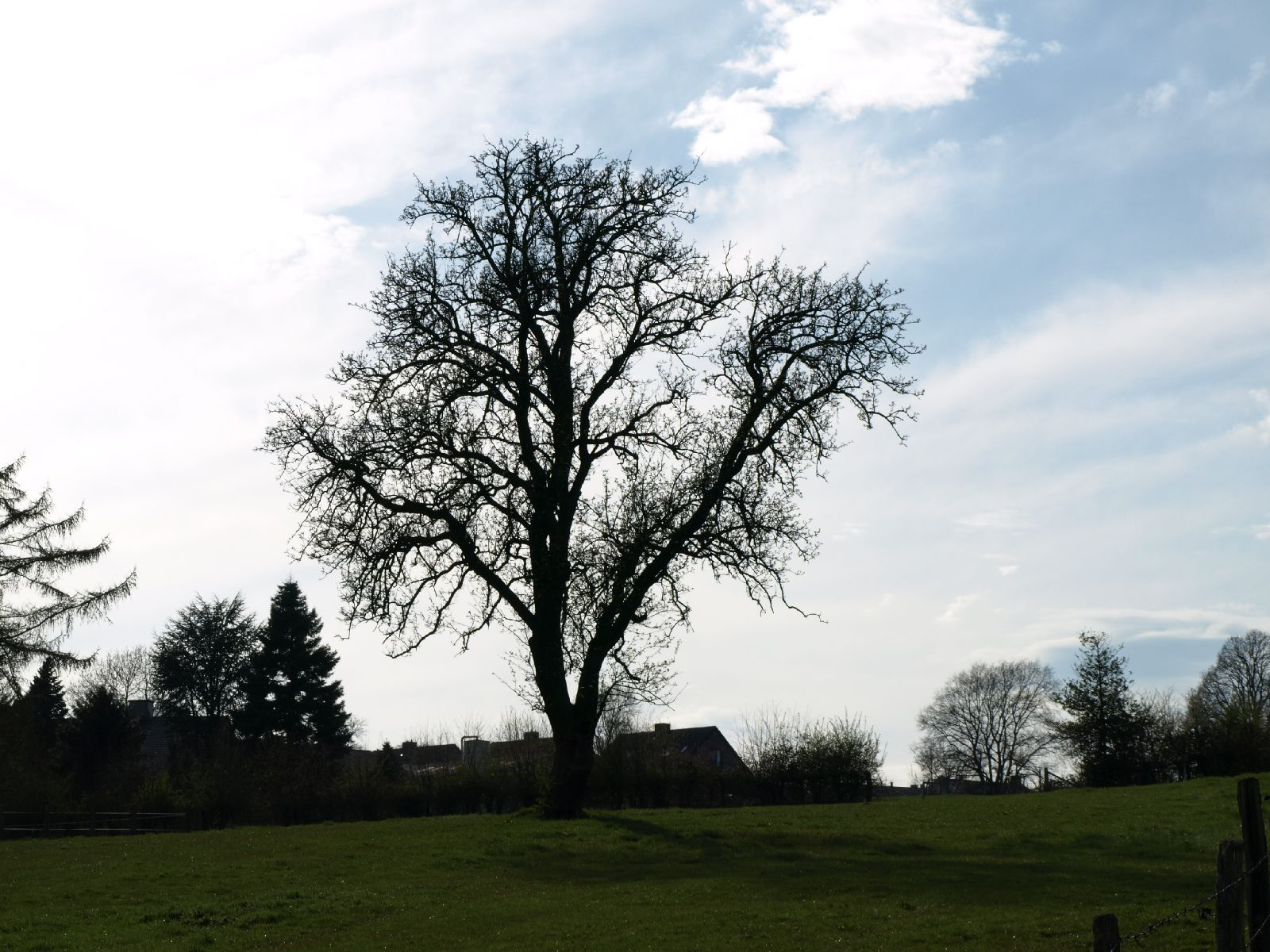 Pflanzen-Baum-Silhouette-Foto_Textur_B_P4201544
