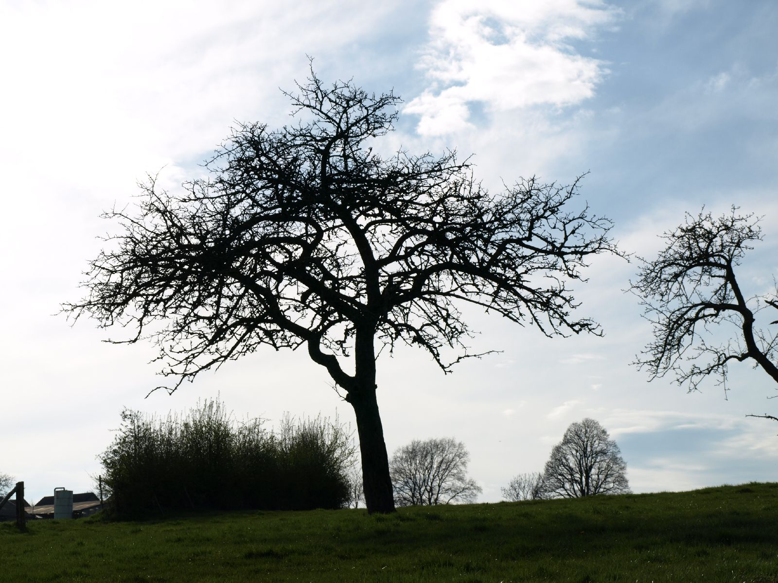 Pflanzen-Baum-Silhouette-Foto_Textur_B_P4201545