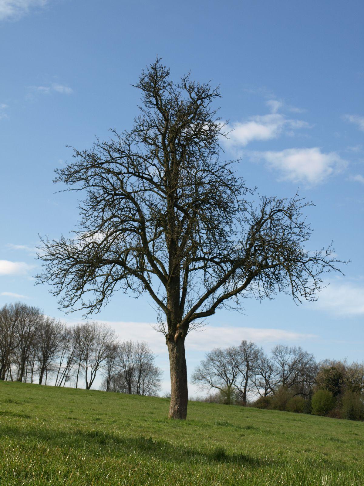 Pflanzen-Baum-Silhouette-Foto_Textur_B_P4201549