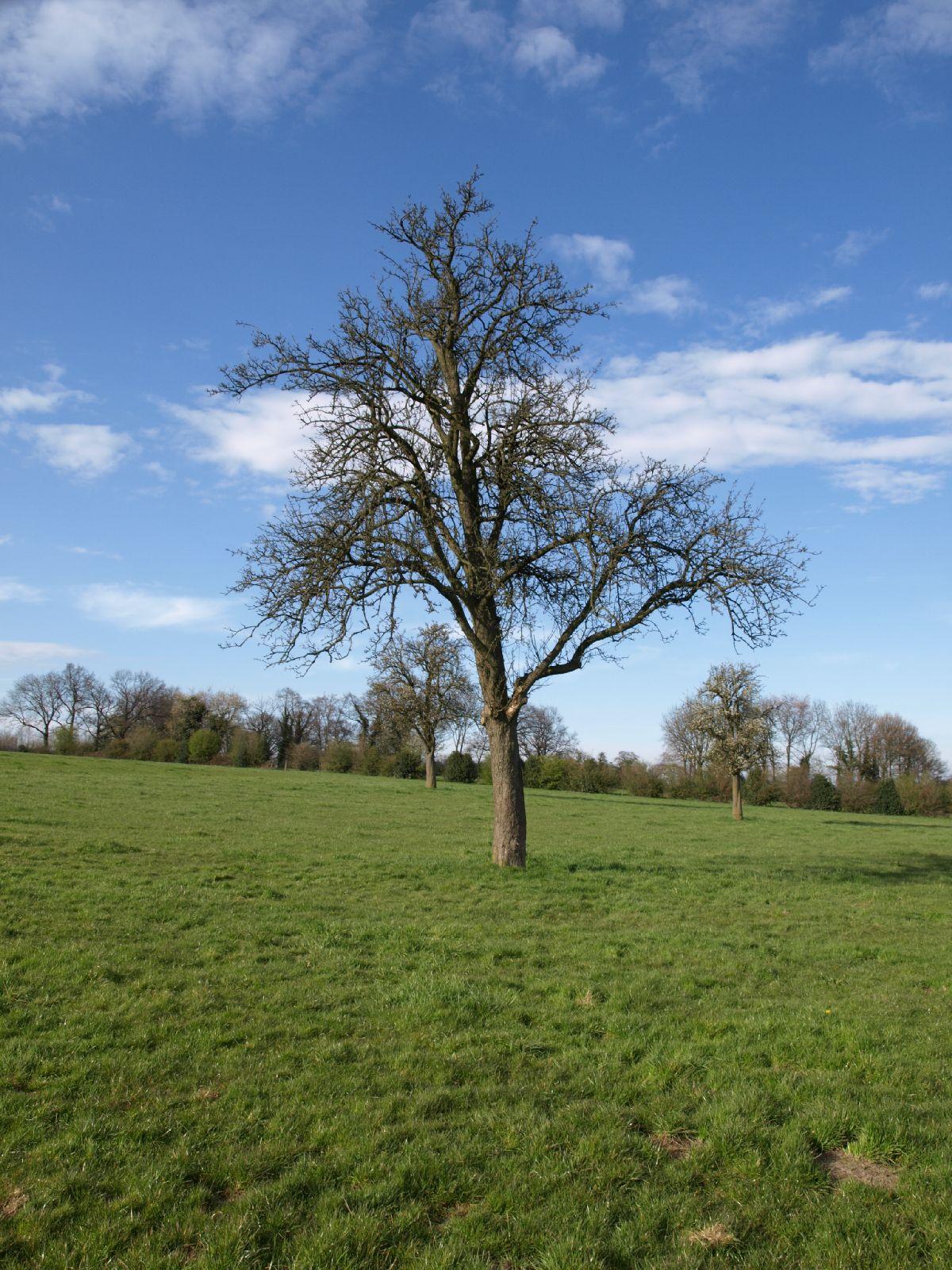 Pflanzen-Baum-Silhouette-Foto_Textur_B_P4201557