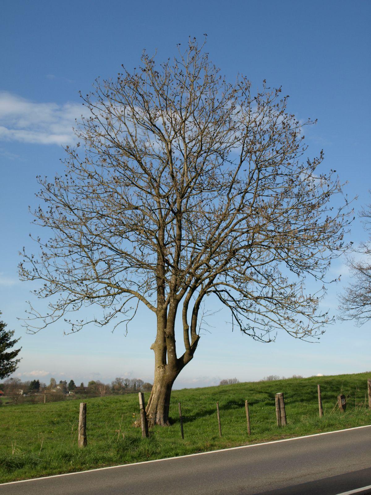 Pflanzen-Baum-Silhouette-Foto_Textur_B_P4201571