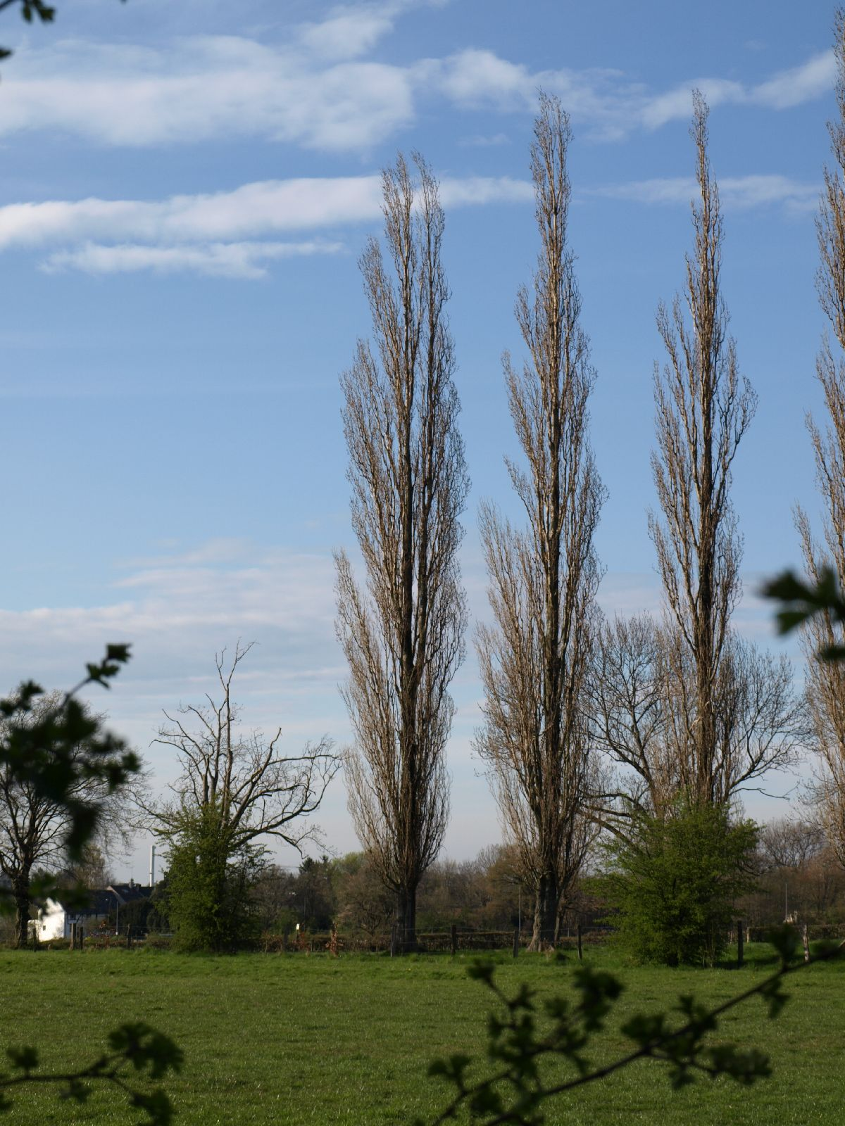 Pflanzen-Baum-Silhouette-Foto_Textur_B_P4201574