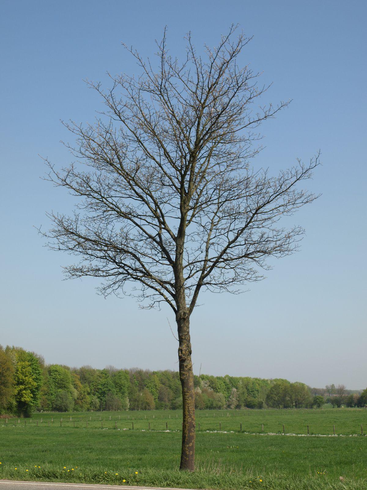 Pflanzen-Baum-Silhouette-Foto_Textur_B_P4212531