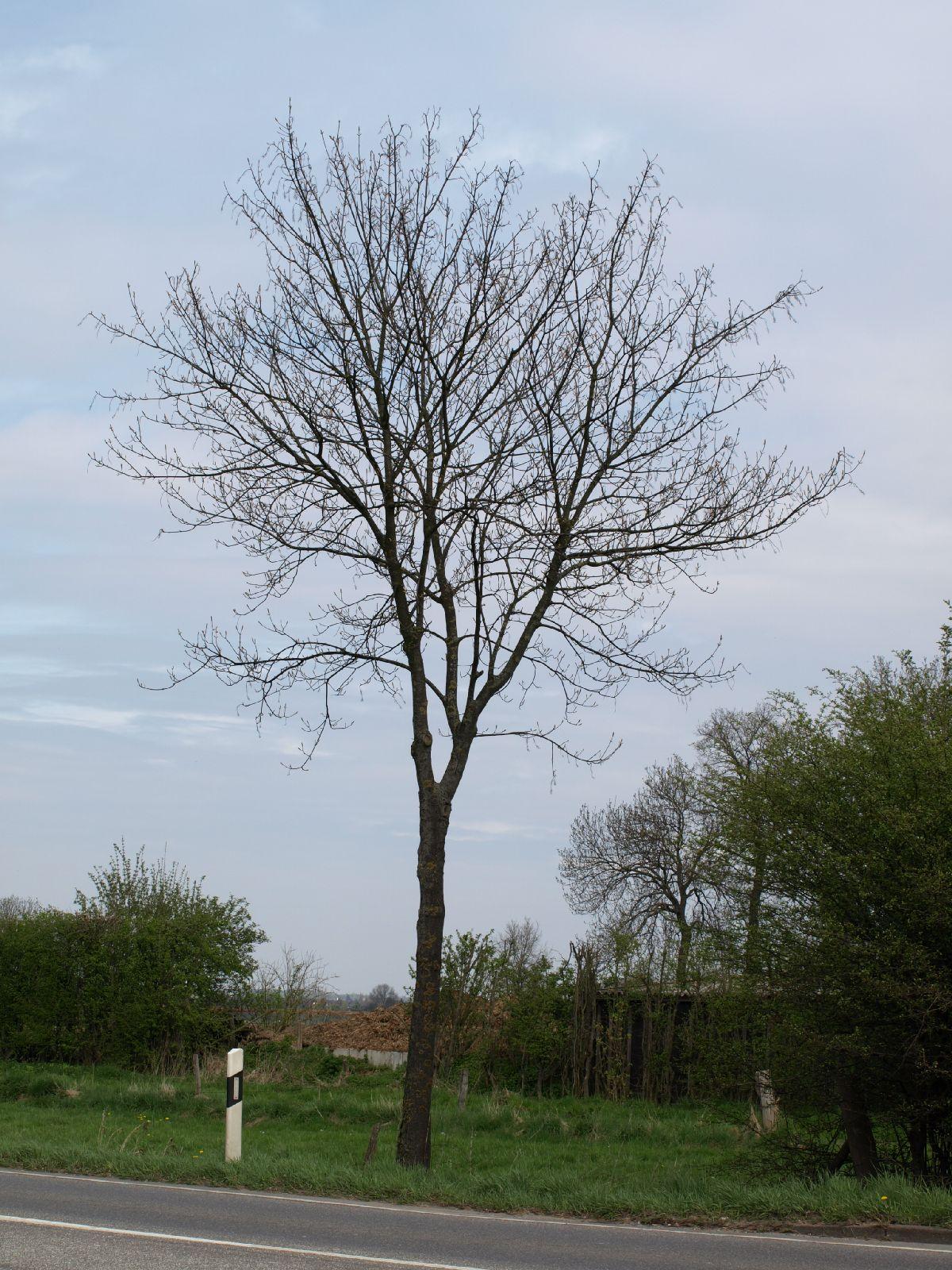 Pflanzen-Baum-Silhouette-Foto_Textur_B_P4261828