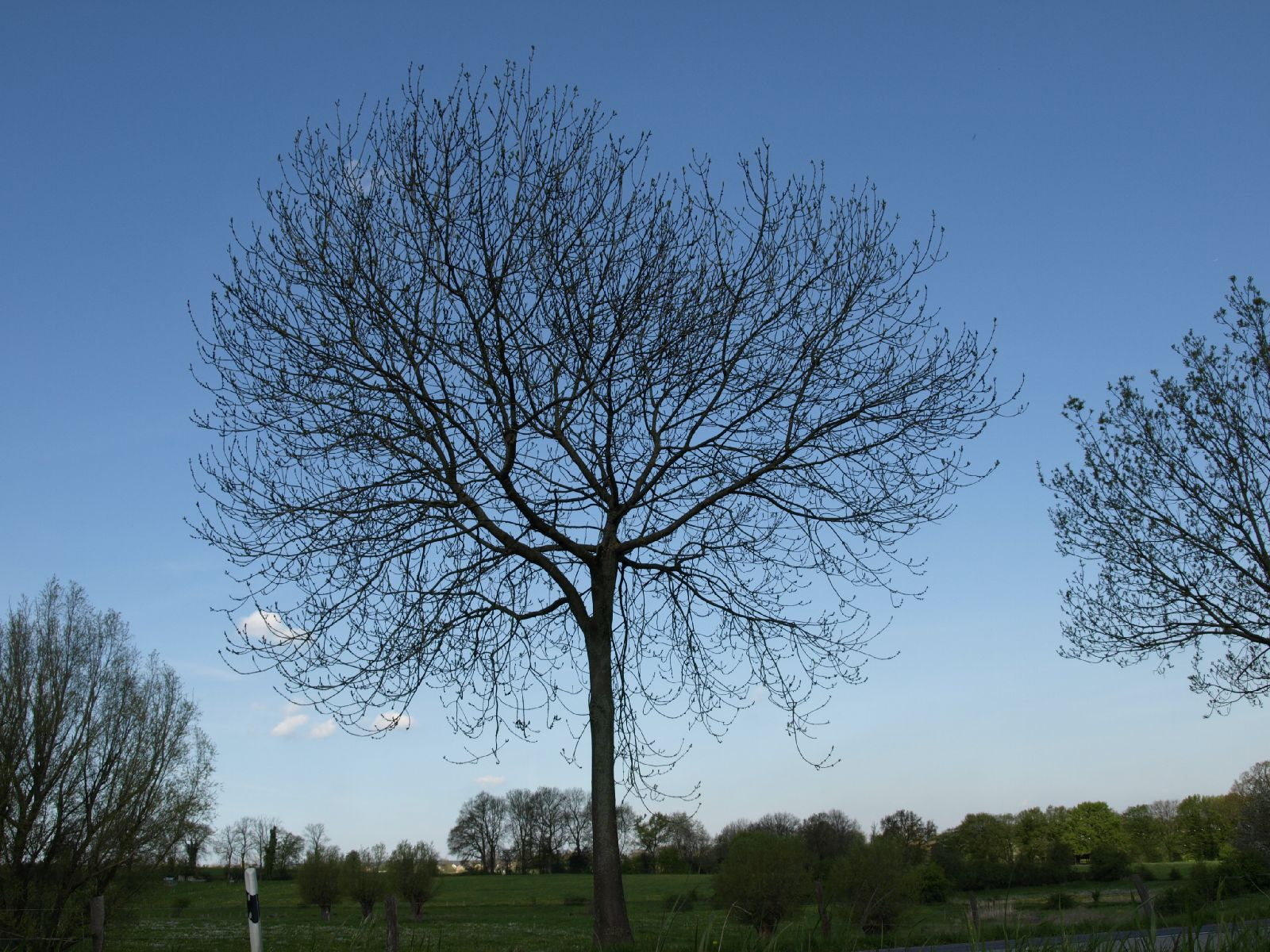 Pflanzen-Baum-Silhouette-Foto_Textur_B_P5032330
