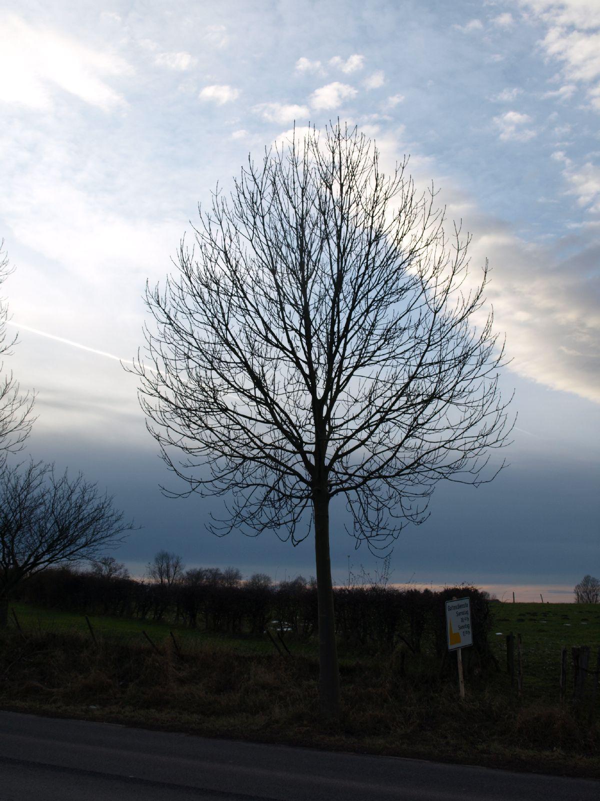Pflanzen-Baum-Silhouette-Foto_Textur_B_PC147676