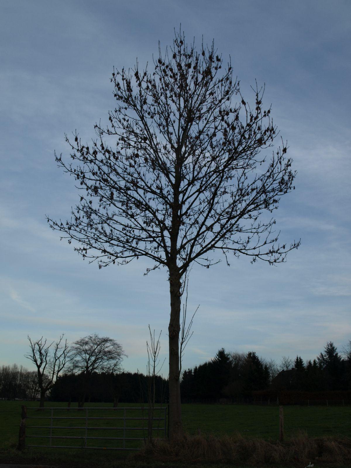 Pflanzen-Baum-Silhouette-Foto_Textur_B_PC147680
