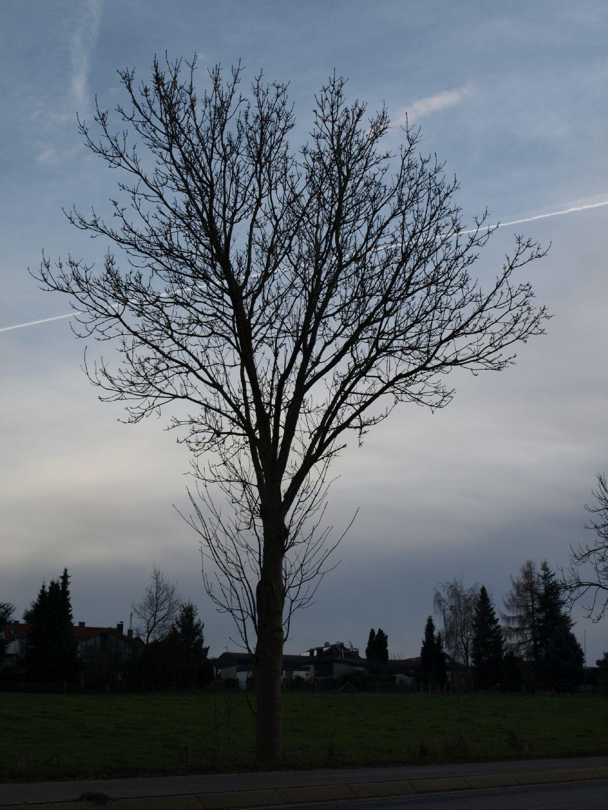 Pflanzen-Baum-Silhouette-Foto_Textur_B_PC147687