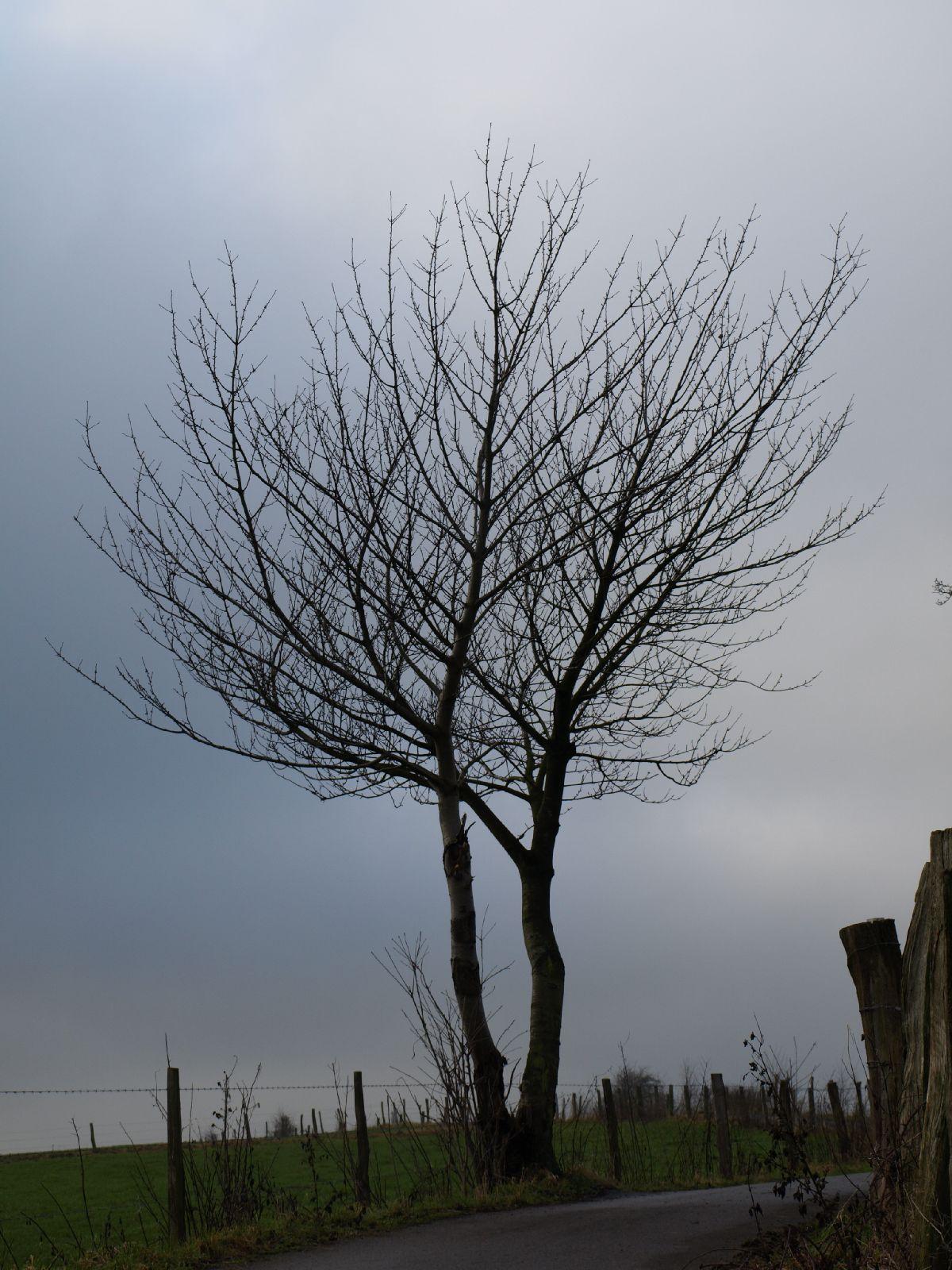 Pflanzen-Baum-Silhouette-Foto_Textur_B_PC238025