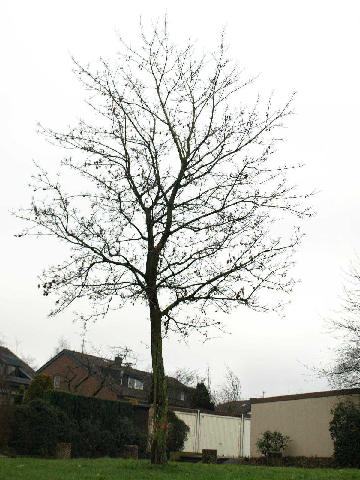 Pflanzen-Baum-Silhouette-Foto_Textur_B_PC238092