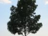 Pflanzen-Baum-Silhouette-Foto_Textur_B_03440