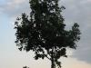 Pflanzen-Baum-Silhouette-Foto_Textur_B_03450