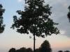 Pflanzen-Baum-Silhouette-Foto_Textur_B_03460