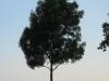 Pflanzen-Baum-Silhouette-Foto_Textur_B_03470